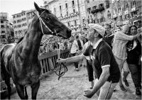 """B01 - Mammini Massimiliano """"Palio di Siena 927"""""""