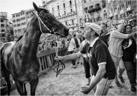 """06 - Mammini Massimiliano """"Palio di Siena 927"""""""