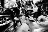 """08 - Delli Carlo """"Jodh street caos"""""""