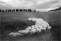 """Brondi Alessio """" Tra tradizione e tecnologia 03 """" (2014)"""