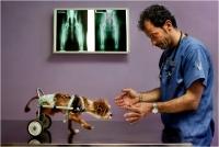 "02 - Bani Angelo ""Pronto soccorso veterinario 6"""
