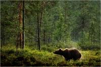 "10 - Bernardeschi Valter ""Pioggia in foresta"""