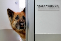"19 - Bani Angelo ""Pronto soccorso veterinario 5"""