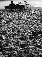 """Barsotti Marco """" Vita in autunno """" (1975)"""