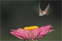 """Batisti Moreno """" Sul fiore """" (1988)"""