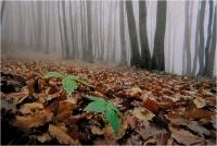 """Beconcini Fabio """" Luci del bosco 05 (Nebbia al P.della calla 2) """" (1997)"""