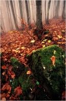 """Beconcini Fabio """" Luci del bosco 06 (Nebbia al P.della calla) """" (1997)"""
