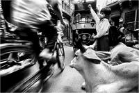 """Delli Carlo """" Jodh street caos """" (2007)"""