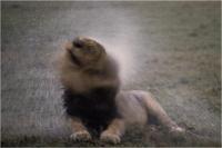 """Delli Carlo """" Shake and splash """" (1995)"""
