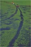 """Gaiotto Enzo """" Lungo il fiume 1 """" (1988)"""