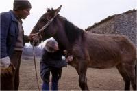 """Gambicorti Mauro """" Passato e presente n° 2 """" (1993)"""