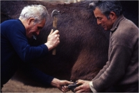 """Gambicorti Mauro """" Passato e presente n° 3 """" (1993)"""