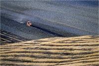 "Gambicorti Mauro "" Paesaggio n° 3 "" (1984)"