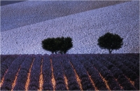 """Gambicorti Mauro """"Provenza"""" (1989)"""