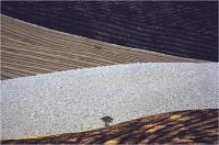 "Gambicorti Mauro ""Toscana b"" (1989)"