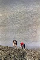 "Gambicorti Mauro "" La semina "" (1981)"