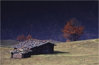 """Gambicorti Mauro """" Alpe di Susi """" (1987)"""