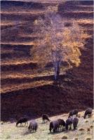 """Gambicorti Mauro """" Paesaggio 3-87 """" (1987)"""