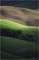 """Garuti Fabio """" Paesaggio toscano 3 """" (1994)"""