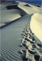 "Goiorani Alberto ""Desert traces"" (1999)"