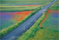 "Goiorani Alberto ""Flowers streets"" (1998)"