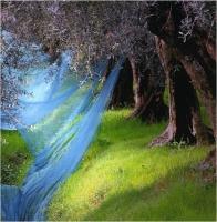 """Marchetti Massimo """" Azzurro """" (2005)"""
