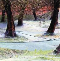 """Marchetti Massimo """" Olivi """" (2004)"""