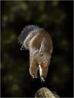 """Salvini Alessandro """" Squirrel jump 2 """" (2009)"""