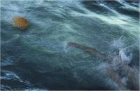 """Sbrana Piero """" In acqua """" (1983)"""