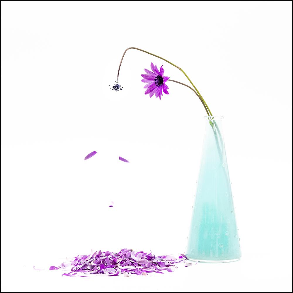 """Orietta Bay legge """"Anemone il fiore del vento…"""" di Roberto Filomena"""